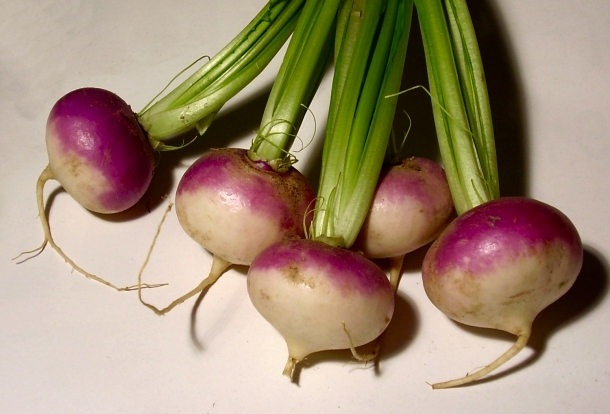 Purple Top Milan turnip